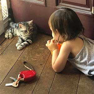 american shorthair kitten and child