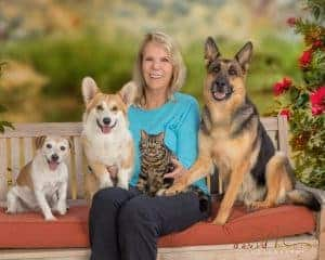 american shorthair with dogs
