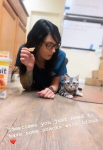 Milla's Kats Linus, cat mascot at AAC Veterinary Hospital
