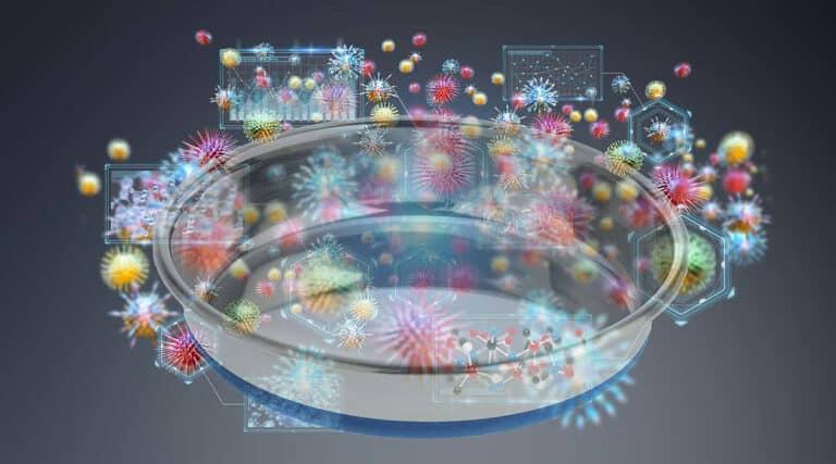 bacteria on pet bowl